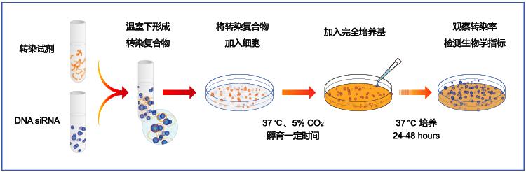 新品细胞转染试剂助力实验